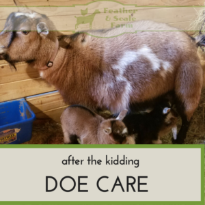 After The Kidding: Doe Care