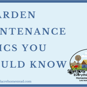 4 Gardening Maintenance Basics You Should Know
