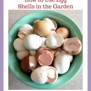 Using Eggshells in the Garden