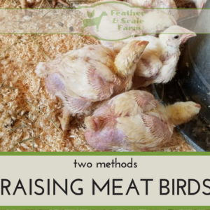 Raising Meat Birds: Two Methods