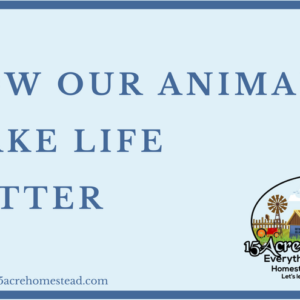 How Our Animals Make Life Better