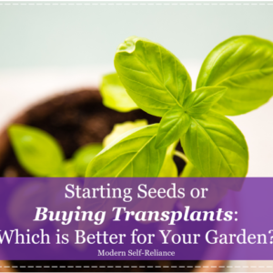 Which is Better for Your Garden?: Direct Sow or Transplants