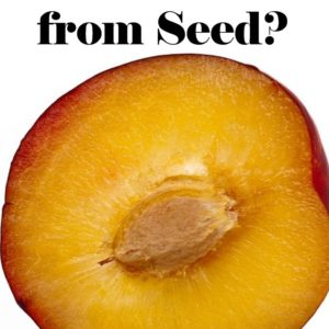 Can You Grow Fruit Trees From Seed?