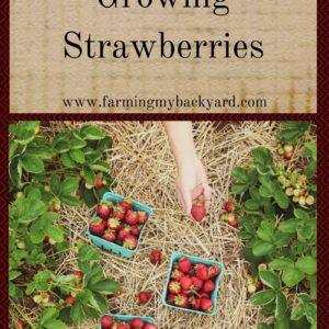 The Greatest Things About Growing Strawberries