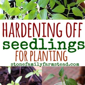 Hardening Off Seedlings for Planting