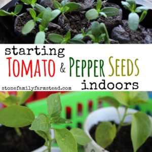 Starting Tomato & Pepper Seeds Indoors