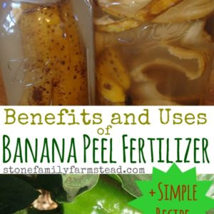 Banana Peel Fertilizer Benefits and Uses