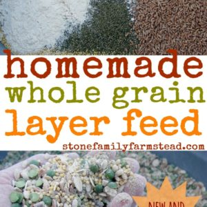 New and Improved Homemade Whole Grain Layer Feed (Non-GMO)