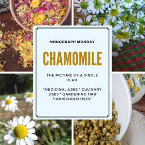 Medicinal Uses for Chamomile