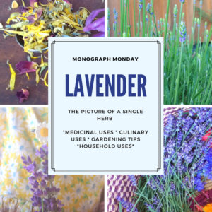 20+ Reasons to Grow Lavender on the Homestead