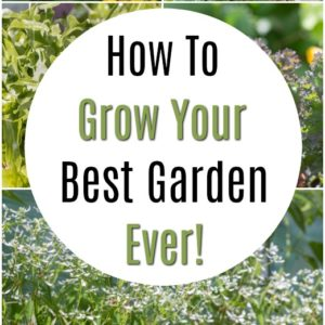 How To Grow Your Best Garden Ever