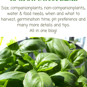 Sweet Basil. All you need to know to grow it.
