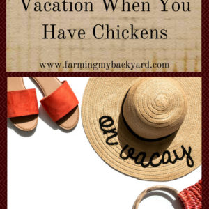How To Take A Vacation When You Have Chickens