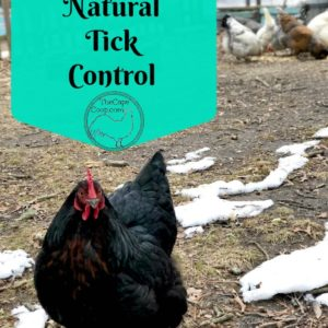 Chickens – Natural Tick Control
