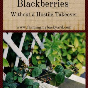 How To Grow Blackberries Without A Hostile Takeover