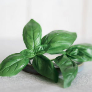 How to Grow, Preserve and Use Basil