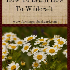 How To Learn How To Wildcraft
