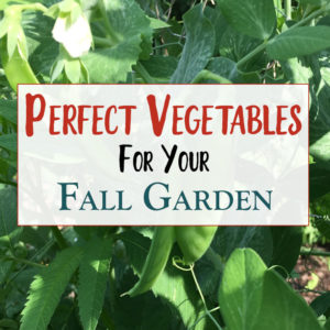 Best Plants For Your Fall Garden