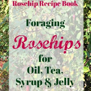 Foraging Rosehips To Use In Home Recipes and Remedies