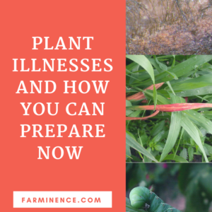 How You Can Prepare For Plant Illnesses