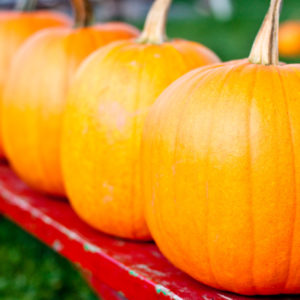 Growing, Harvesting and Storing Pumpkins
