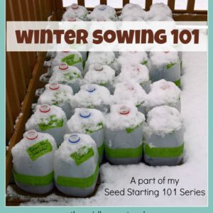 Winter Sowing 101 – How to Simply Start Your Seeds Outdoors in Winter