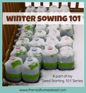 Winter Sowing 101 – How to Simply Start Your Seeds Outdoors